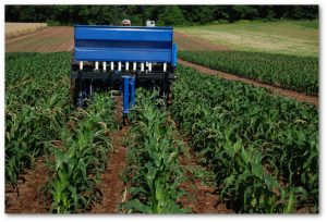 Chris Houser of Interseeder Technology plants covers crops into standing corn in Monroe County.